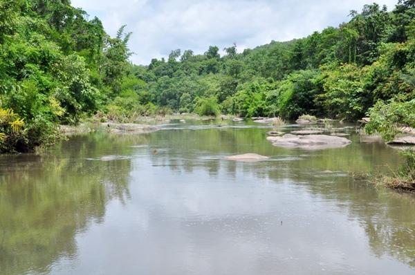 ป่าคลองชมภูที่ยังอดมสมบูรณ์และเป็นแหล่งที่อยู่ของจระเข้น้ำจืด แต่ชาวบ้านหวั่นว่าจะได้รับผลกระทบหากมีการให้สัมปทานเหมืองทอง