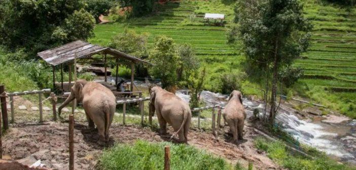 'ChangChill' และวันช้างโลก