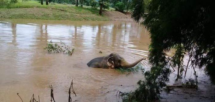 เร่งช่วยเหลือลูกช้างป่าถูกน้ำพัดตกคลองชมภู หวั่นฝนกระหน่ำซ้ำ-จมน้ำ