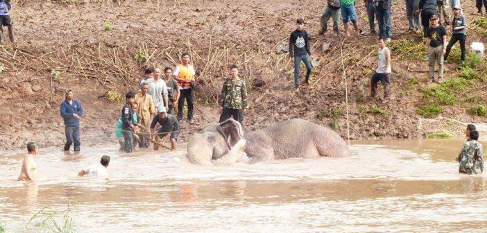 ลุ้นหนักตลอดคืนช่วยลูกช้างป่าถูกน้ำพัดยังไม่สำเร็จ ล่าสุดชาวบ้านนับร้อยช่วยกันลากเกยตลิ่งรอทีมคชบาล จ.ลำปาง พาตัวไปรักษา