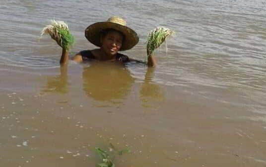 น้ำโขงยังท่วมสูง-เกษตรริมตลิ่งเสียหายหนัก ชาวบ้านต้องดำน้ำเก็บผลผลิต ข้อมูลชี้เป็นผลจากเขื่อนระบายน้ำ