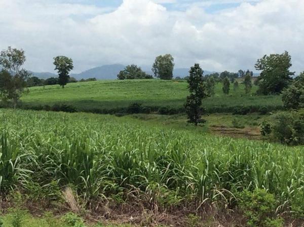 ที่ดินในแปลงเกษตรของชาวบ้านที่ถูกเวนคืนโดยทางจังหวัดอ้างว่าเป็นที่ป่าไม้และรกร้างว่างเปล่า