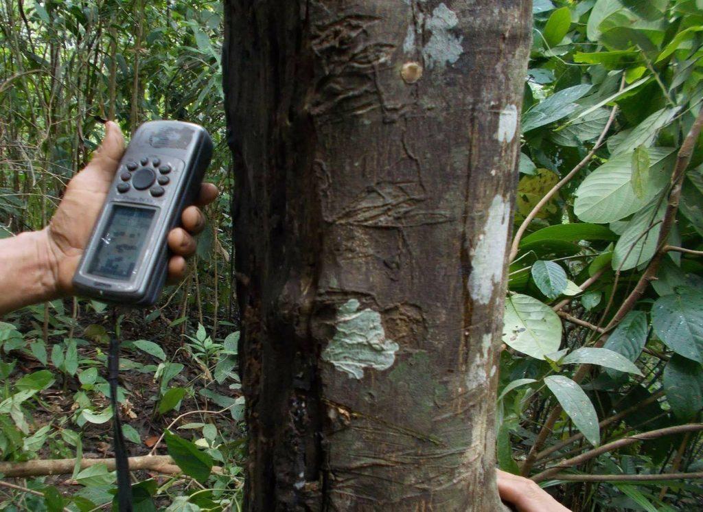ต้นทุเรียนขนาดใหญ่ ต้นมะกรูดยักษ์และสวนหมาก ที่ชาวบ้านบางกลอยปลูกไว้ เป็นหลักฐานส่วนหนึ่งที่ยืนยันความเป็นชุมชนดั้งเดิมในป่าแก่งกระจานซึ่งเป็นการยืนยันคำพูดของปู่คออี้ มีมิ