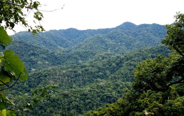 ผืนป่าต้นน้ำเพชรบริเวณใจแผ่นดิน