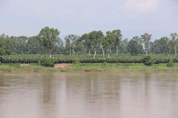 รูปสวนกล้วยริมแม่น้ำโขง โดย Transbordernews
