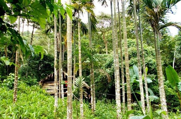 สภาพบ้านเรือนและสวนหมาก สวนผลไม้บนหมู่บ้านบางกลอยบนซึ่งชาวบ้านอยู่กันอย่างมีควมสุขก่อนถูกบังคับให้ย้ายลงมาอยู่ข้างล่าง