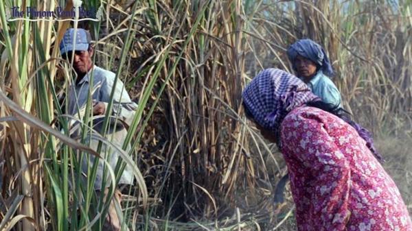 ภาพ Koam Chanrasmey / /www.phnompenhpost.com